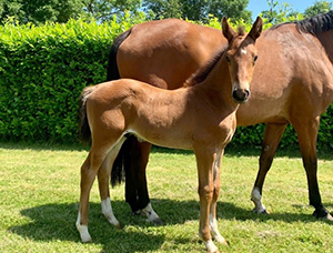 2020 Foal Collection: Delaqour Premium Gmbh Welcomes A Quality Crop Of Showjumping & Dressage Future Superstars